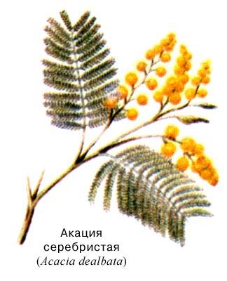 http://bioword.narod.ru/A/pic/A091H.jpg
