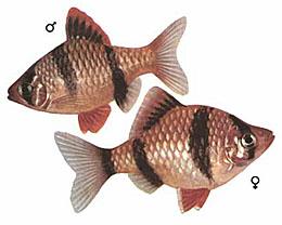Происхождение рыб.  Аквариумные растения.  Главная.